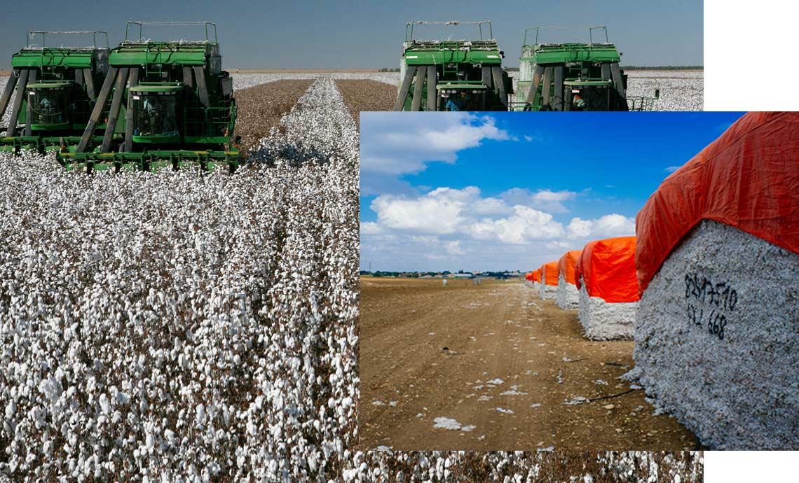 Eco-Friendly Yoga Leggings Organic Cotton