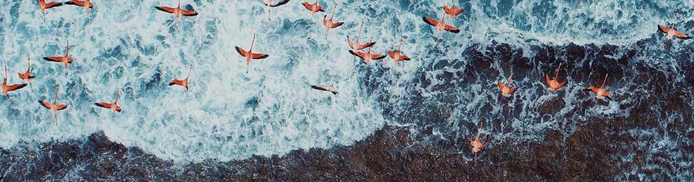 Konktiere-Uns-Arctic-Flamingo